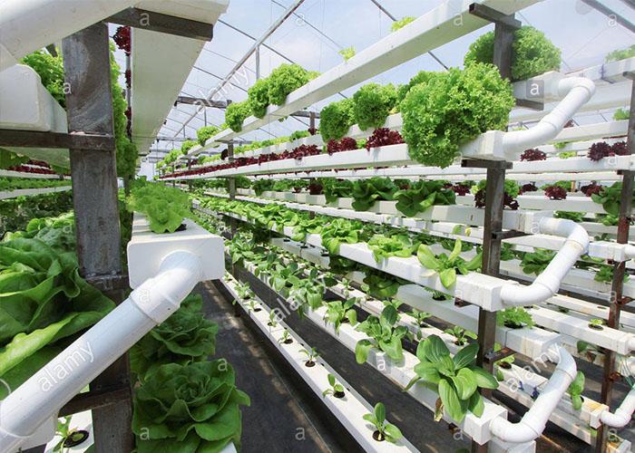کشاورزی عمودی / vertical farming