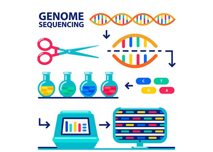 پروژه ژنوم انسان / HGP