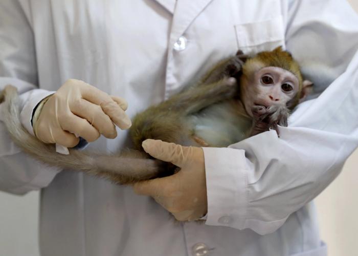 میمون/monkey